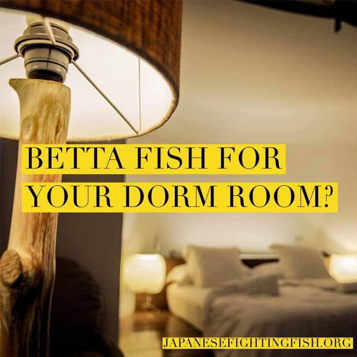 Dorm Room Pets