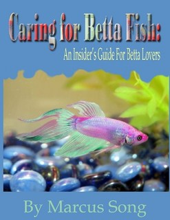 Caring for betta fish the ebook review betta fish care for Betta fish care guide