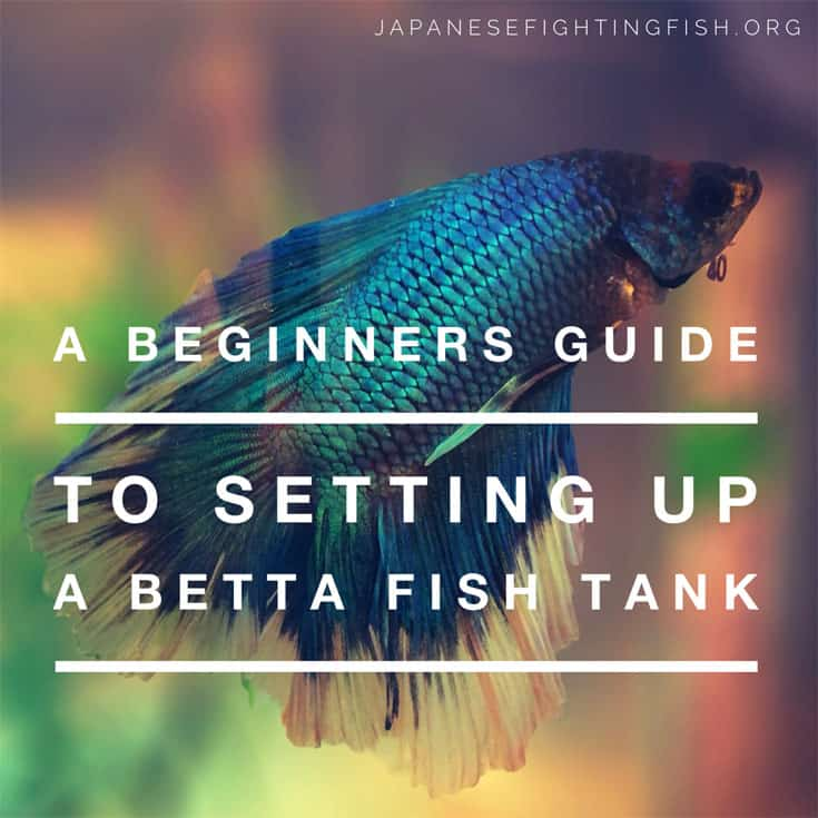 Setting up a betta fish aquarium