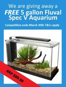 Win A Fluval Aquarium