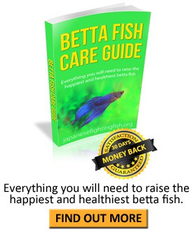 Betta fish book