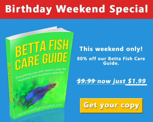 Fish tank care archives betta fish care for Betta fish care guide