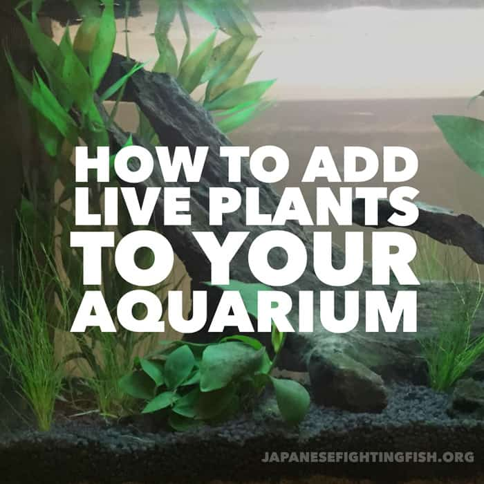 how to add live plants to yor aquarium