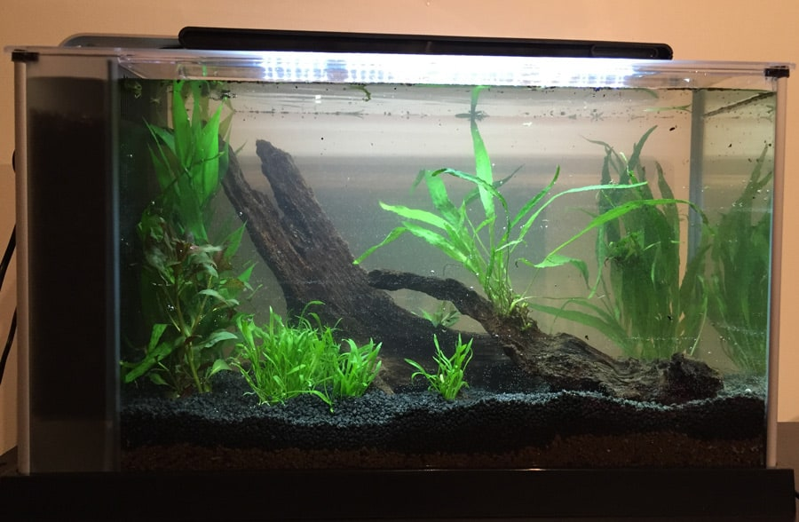 Live plants added