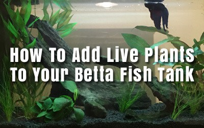 Adding Live Plants
