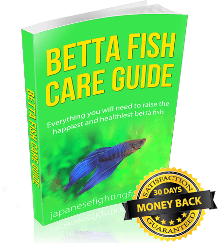 Betta fish book everything you need to raise the for Betta fish care guide