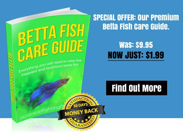 The ultimate one page guide to betta fish care for Betta fish care guide