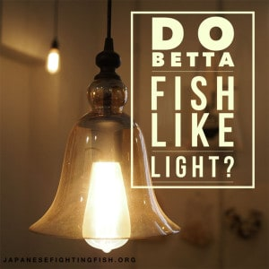 Betta fish light