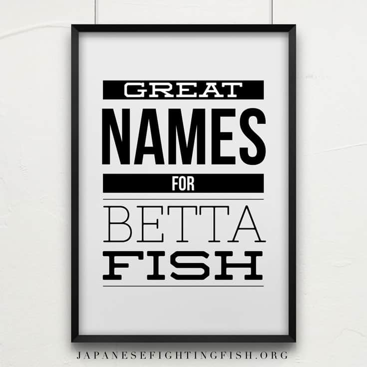 Betta fish names what should i call my betta fish for Clever fish names
