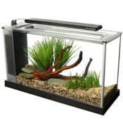 Choosing and setting up a betta fish tank a beginners guide for How to keep fish tank clean without changing water