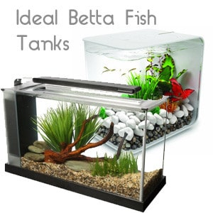 Ideal Betta Fish tanks