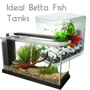 Ideal betta fish tanks guest post from aquarist magazine for Good fish for small tanks