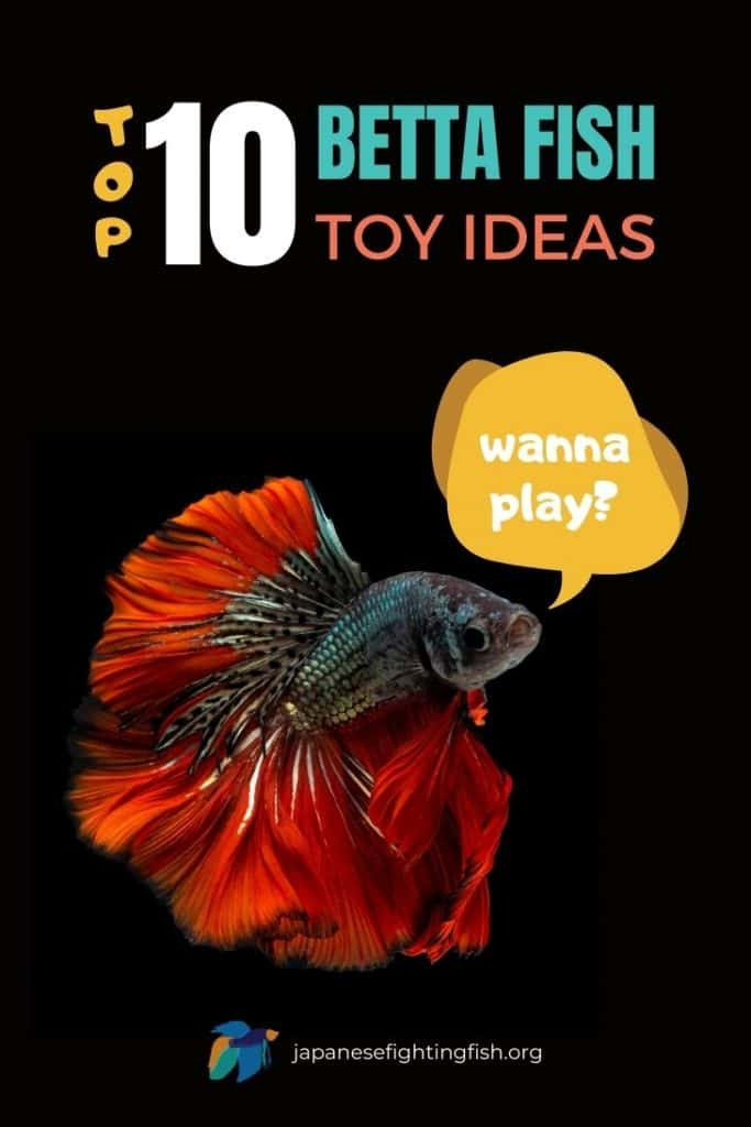 Top 10 Betta Fish Toy Ideas : Don't Have a Bored Betta - JapaneseFightingFish.org
