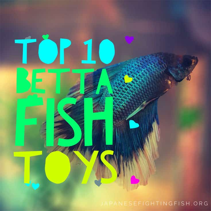 Top 10 ideas for betta fish toys don 39 t have a bored betta for Can you put betta fish with other fish