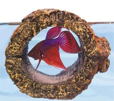 Top 10 ideas for betta fish toys don 39 t have a bored betta for Betta fish floating