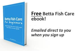 Free betta fish ebook