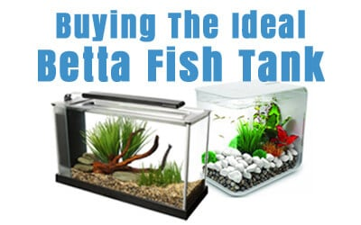 Betta Fish Tanks