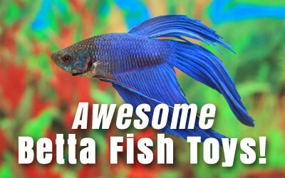 Betta fish care guides articles japanese fighting fish for How to care for a betta fish