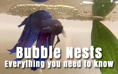 Bubble Nests