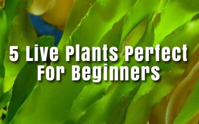 Easy Live Plants