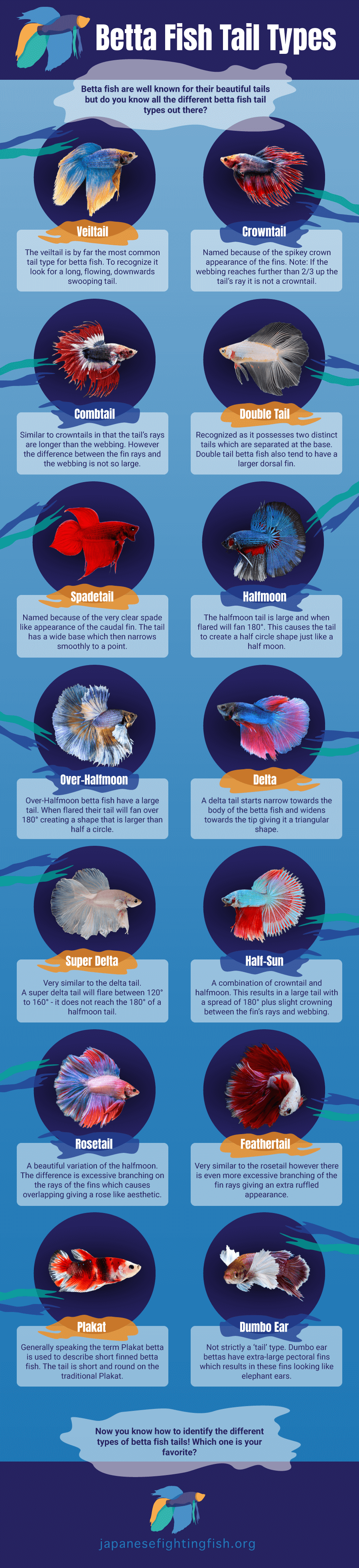 Betta Fish Tail Types Infographic