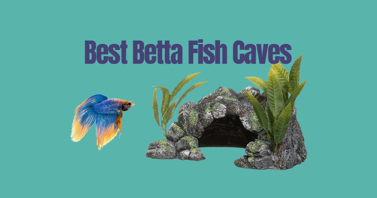 Best Betta Fish Caves Japanesefightingfish Org