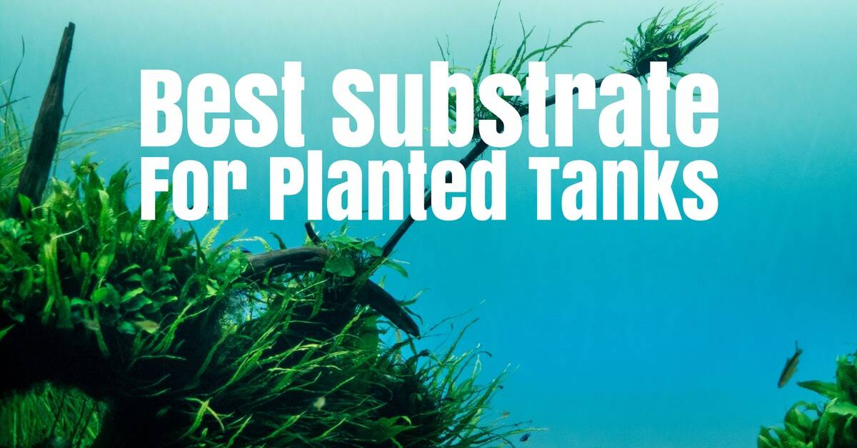 Best Substrate For Planted Tanks Aquarium Substrate