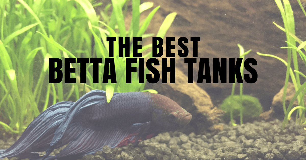 Best betta fish tank form function coolest betta for What is the best time to fish