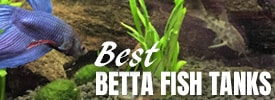 Best Betta fish aquariums