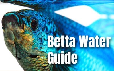 betta fish water