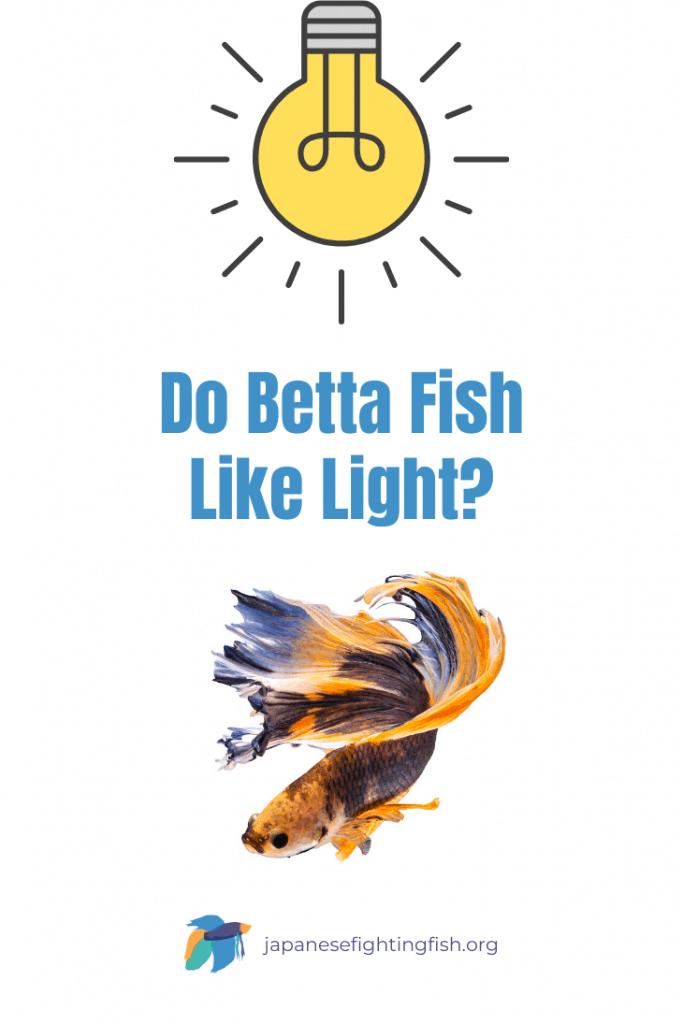 Do Betta Fish Like Light - JapaneseFightingFish.org