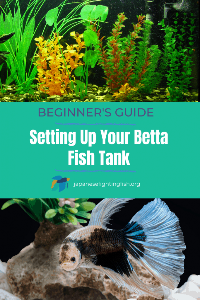 Beginners Guide to Setting Up Your Betta Fish Tank - JapaneseFightingFish.org