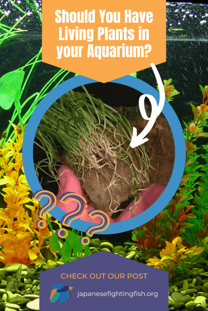 Should You Have Living Plants in Your Aquarium - JapaneseFightingFish,org