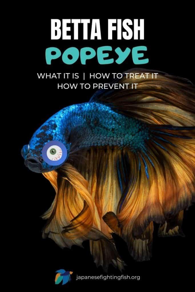 Betta Fish Popeye - JapaneseFightingFish.org