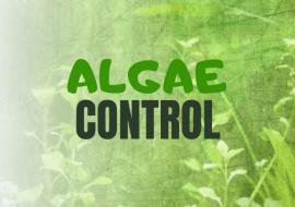 Algae Control – The Ultimate Guide To Removing Algae