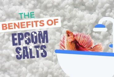 Epsom Salt Bath For Betta