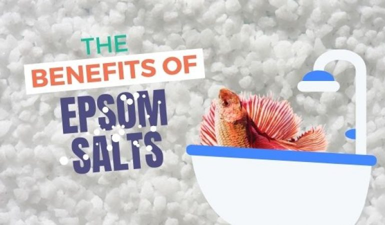 Betta Fish Epsom Salt Bath: Treatment Guide & Dosage for Your Aquarium