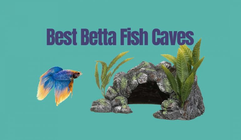 Best Betta Fish Caves - Japanesefightingfish.org