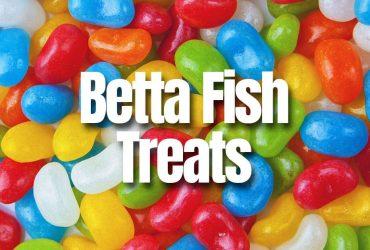 Betta Fish Treats