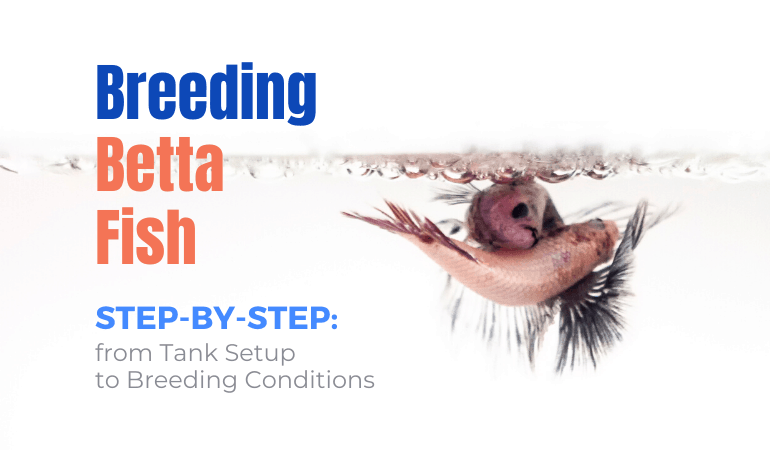 Breeding Betta Fish – Step-by-Step from Tank Setup to Breeding Conditions