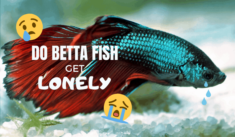 Do Betta Fish Get Lonely? Tips to Keep Yours from Getting Bored Alone