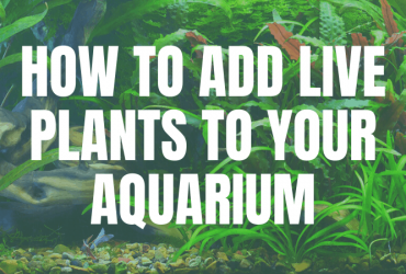 How To Add Live Plants To Your Aquarium – the step by step guide