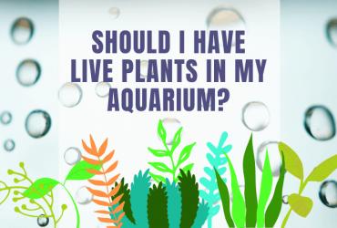 Should I Have Live Plants in my Aquarium?