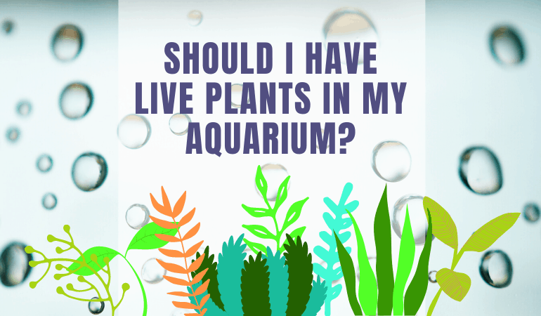 Do Betta Fish Like Live Plants in Their Tanks and Should You Add Them?