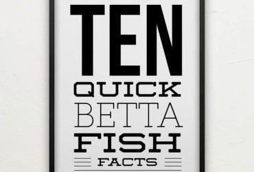 10 Betta Fish Facts