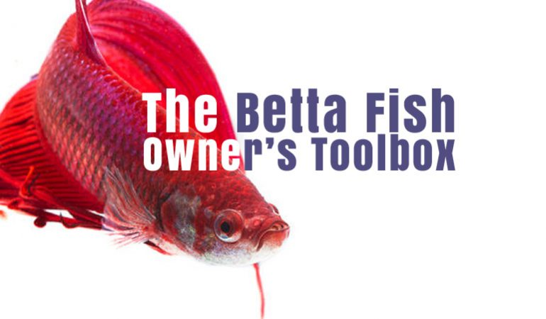 The betta fish owners toolbox 10 tools a betta fish for Do betta fish sleep
