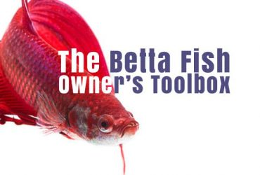 The Betta Fish Owners Toolbox – 10 tools a betta fish owner should not be without