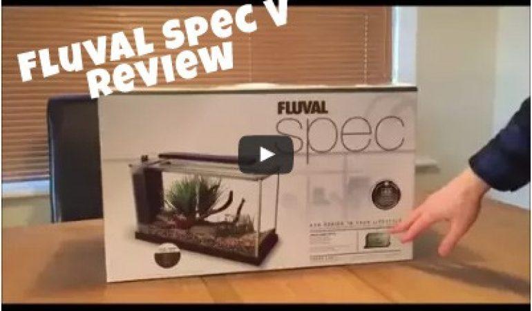 Fluval Spec V Review: Aquarium Unboxing & Full Assessment