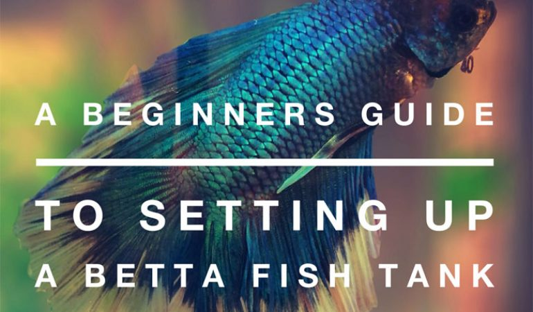 Choosing and setting up a betta fish tank a beginners guide for List of fish that can live with bettas